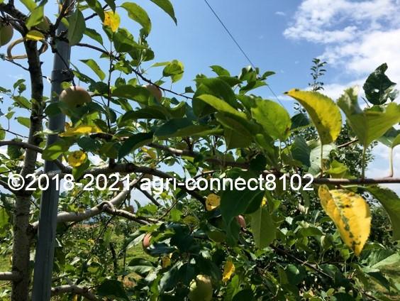 f:id:agri-connect:20210730212146j:plain