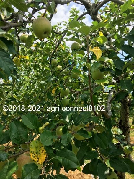 f:id:agri-connect:20210730212149j:plain