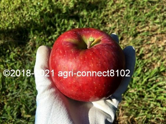 f:id:agri-connect:20210808160855j:plain