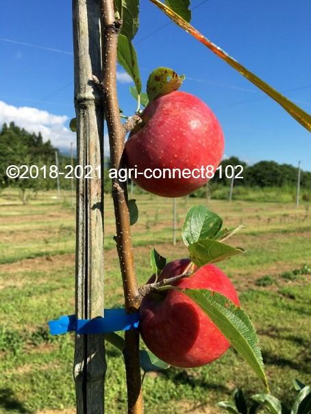 f:id:agri-connect:20210808161006j:plain