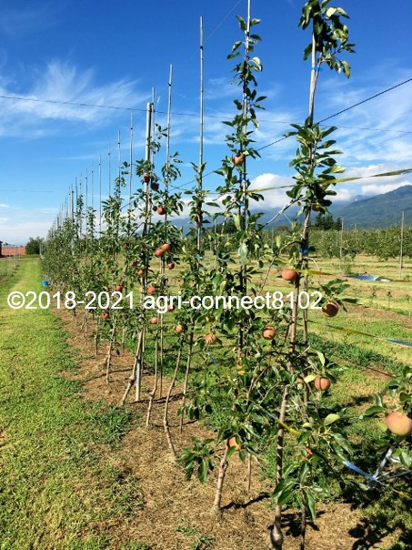 f:id:agri-connect:20210808161333j:plain