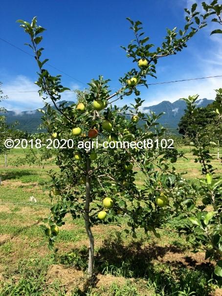 f:id:agri-connect:20210812000312j:plain
