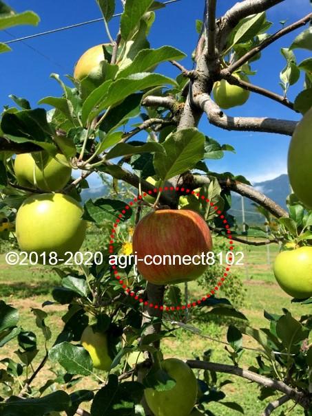 f:id:agri-connect:20210812000548j:plain