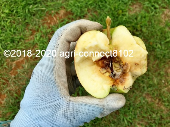 f:id:agri-connect:20210812000651j:plain
