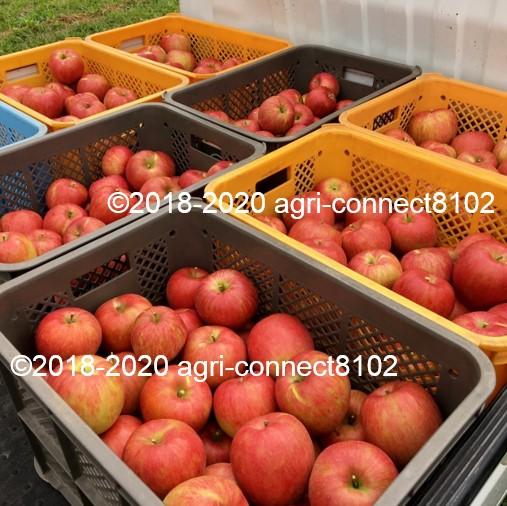 f:id:agri-connect:20210828144012j:plain