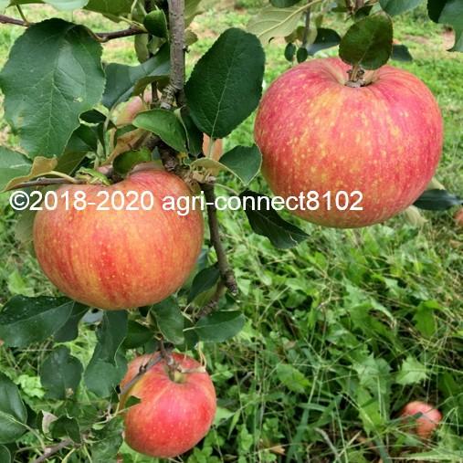 f:id:agri-connect:20210828144016j:plain