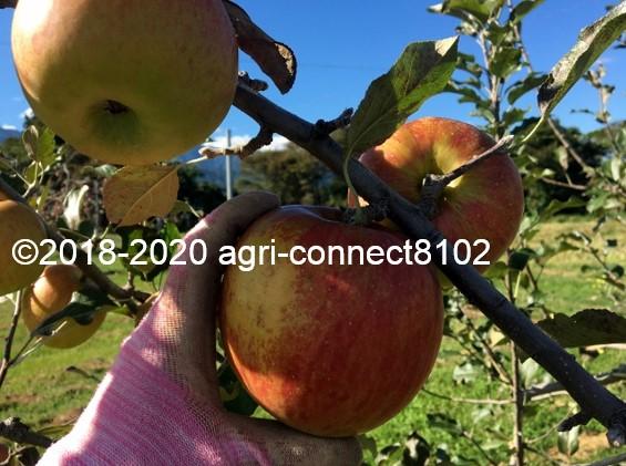 f:id:agri-connect:20210921133602j:plain
