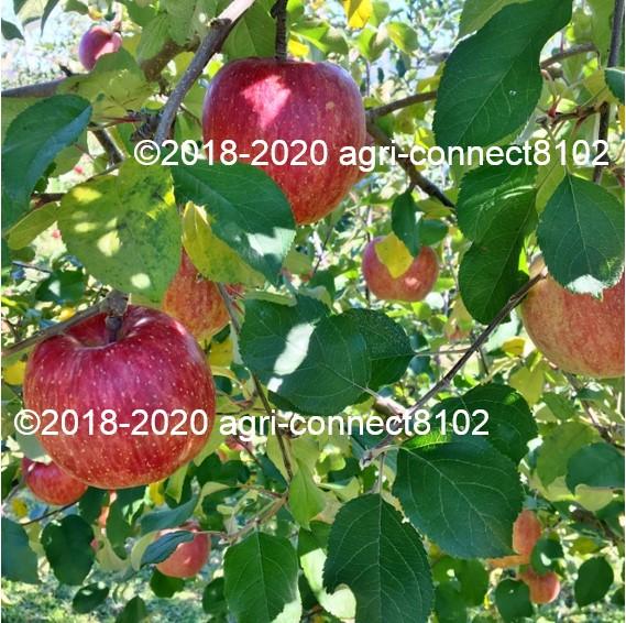f:id:agri-connect:20211010223715j:plain