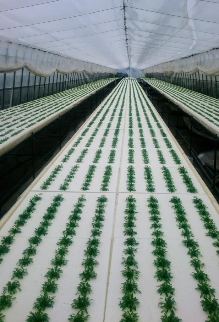 f:id:agri-work:20181215121340j:plain