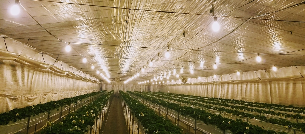 f:id:agri-work:20181226210215j:plain