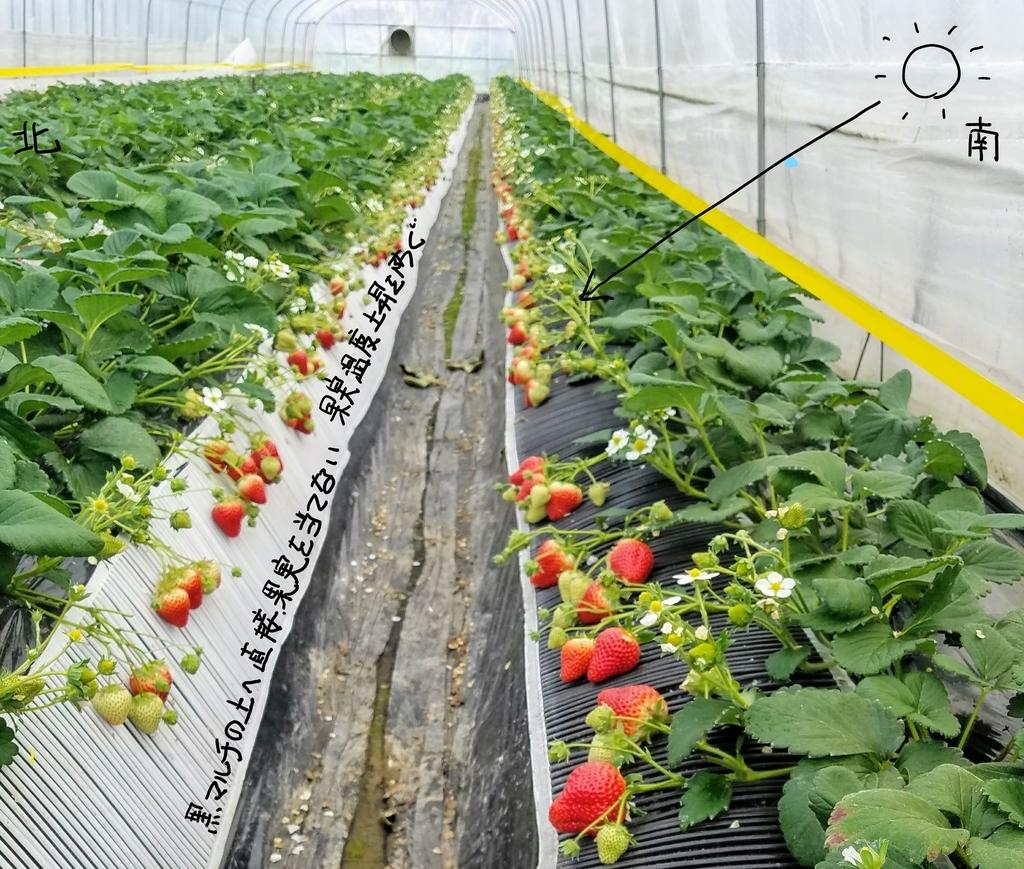 f:id:agri-work:20190110204413j:plain