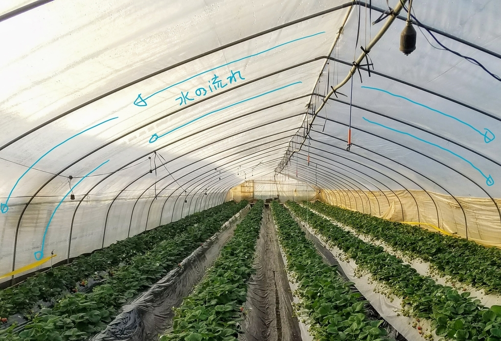 f:id:agri-work:20190110213006j:plain