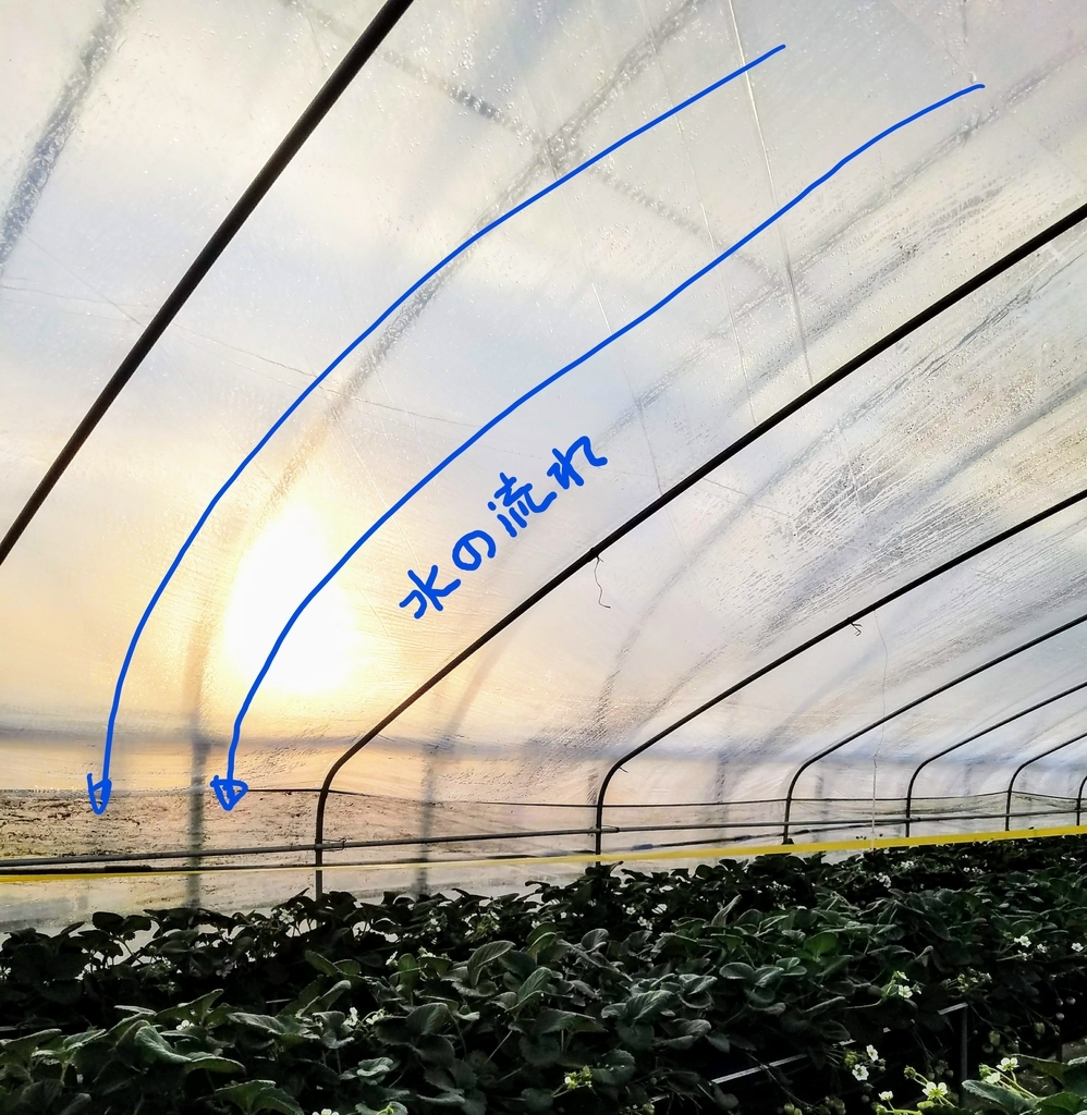 f:id:agri-work:20190110213607j:plain