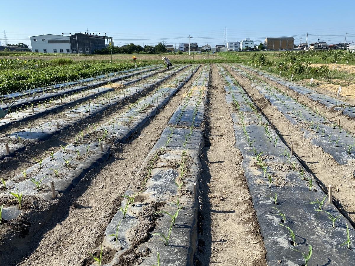 f:id:aguriparktaikennouen:20200815081640j:plain