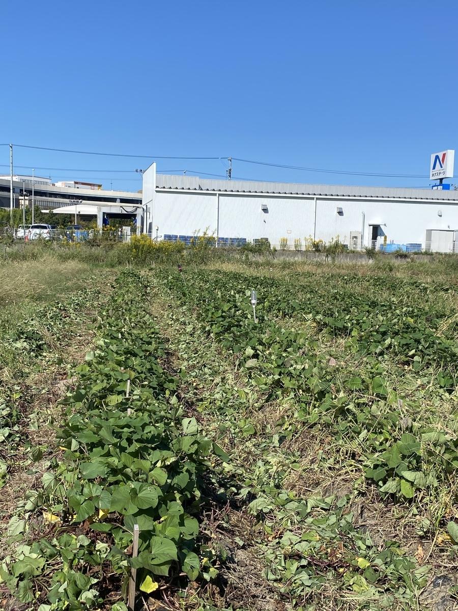 f:id:aguriparktaikennouen:20211015154531j:plain