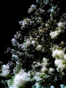 20060414194828.jpg
