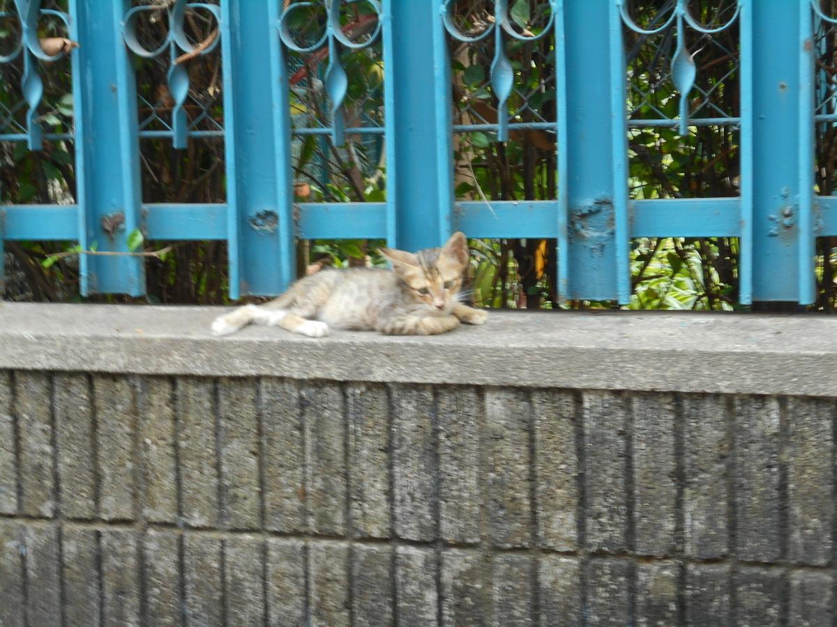 ジャカルタ 猫