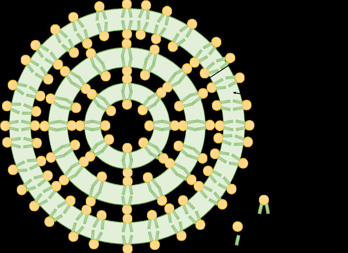 リポソームの模式図