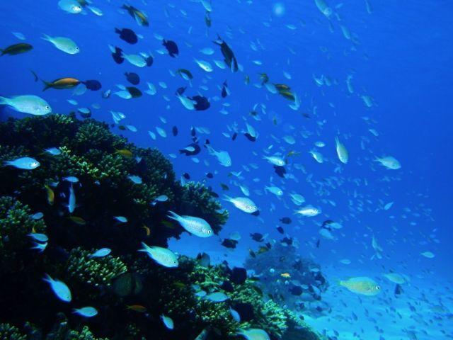 水系生物における生体影響とは?