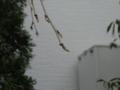 [植物]葉が既に