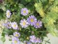 [植物]5.25