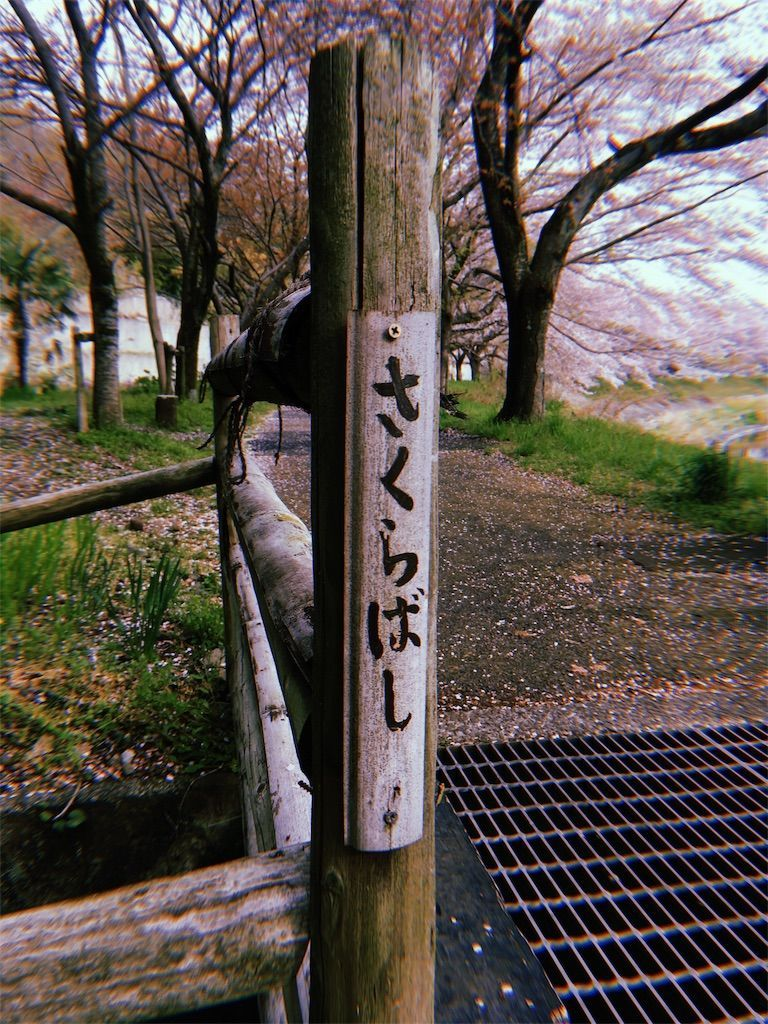 スマホアプリ「hujicom」で撮影した桜並木