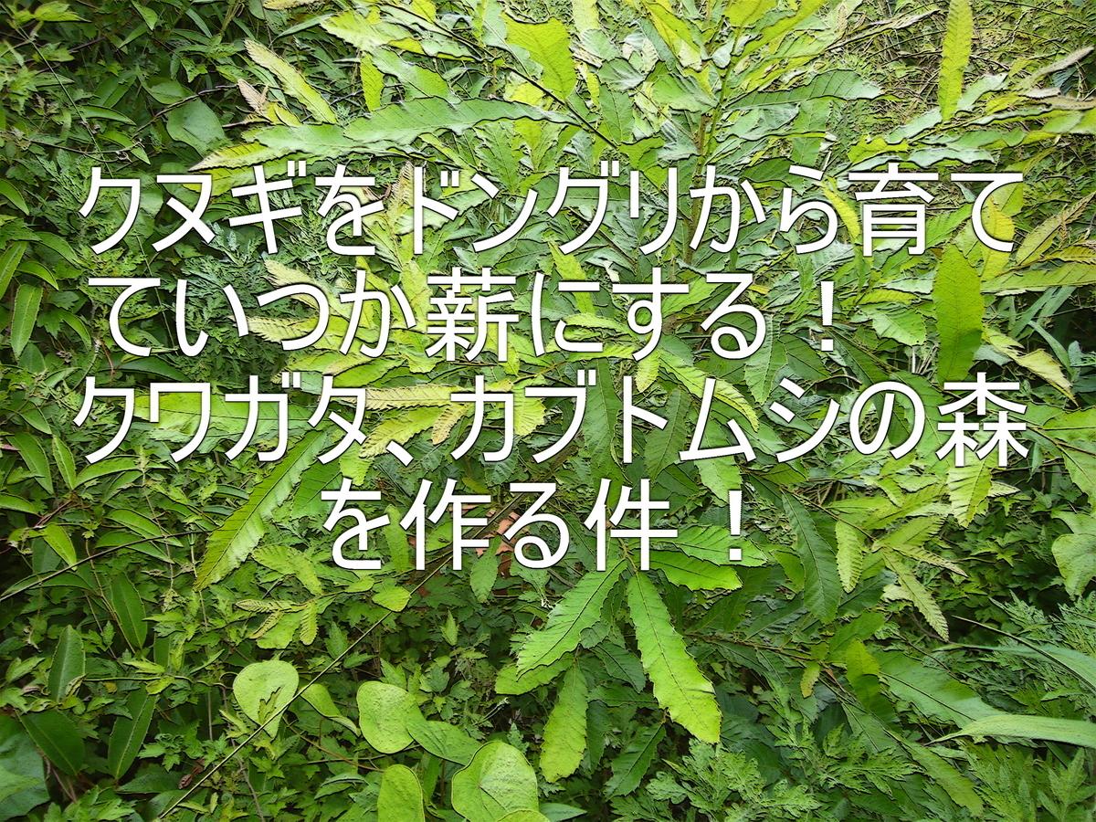 f:id:ai_bou:20190626195208j:plain
