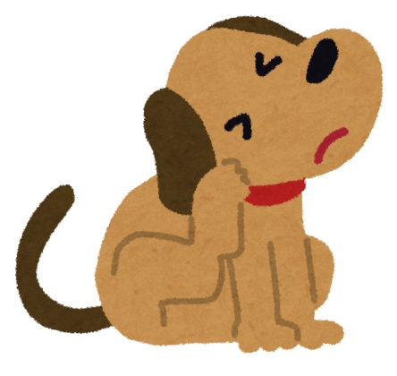 アレルギー体質の犬
