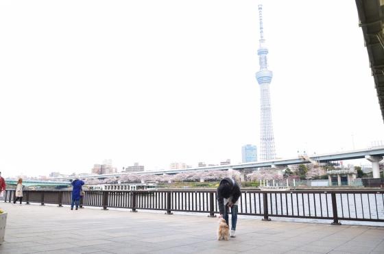 隅田公園・浅草エリア