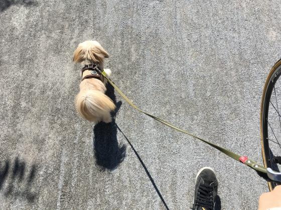 お散歩するまるちゃん