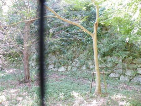 f:id:aigawa2007:20100827232231j:image