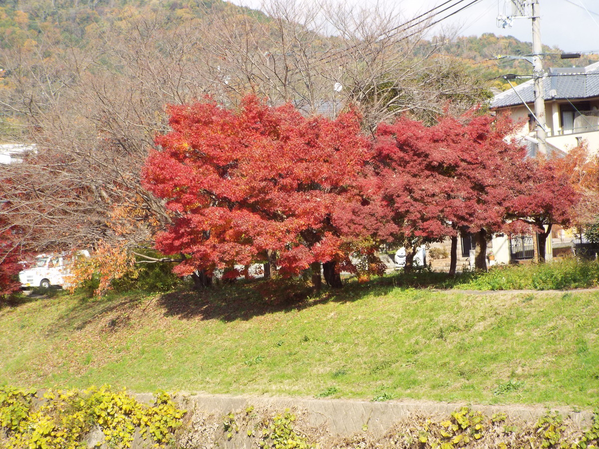 f:id:aigawa2007:20191205125205j:plain
