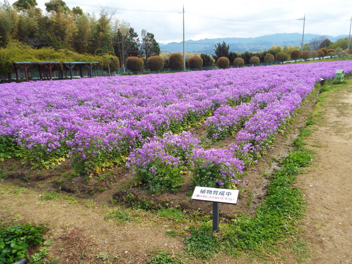 f:id:aigawa2007:20200402133502j:plain