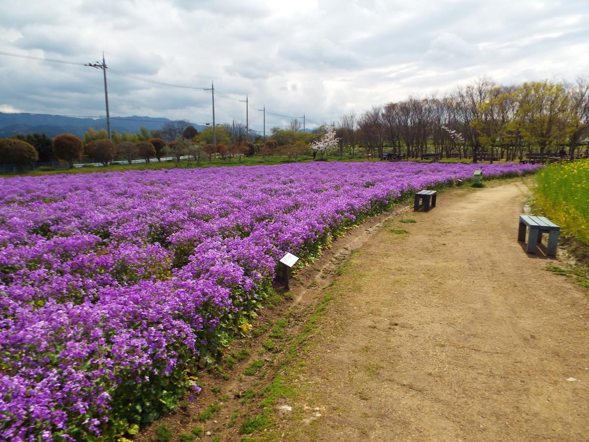 f:id:aigawa2007:20200402133546j:plain