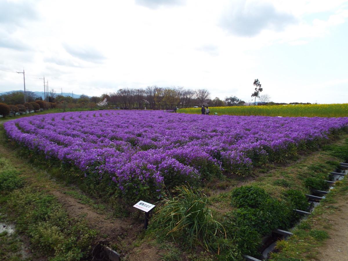 f:id:aigawa2007:20200402134515j:plain