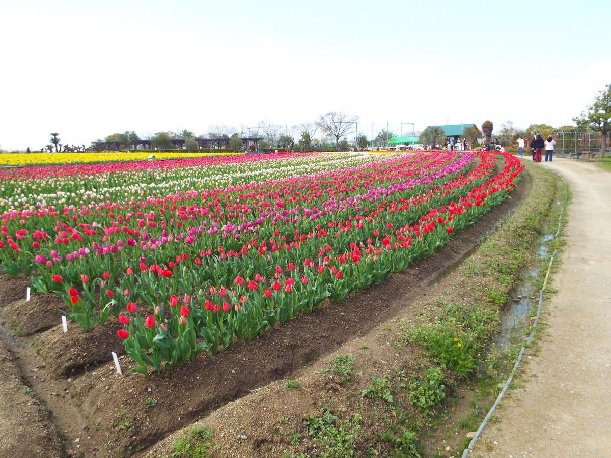 f:id:aigawa2007:20200402134520j:plain