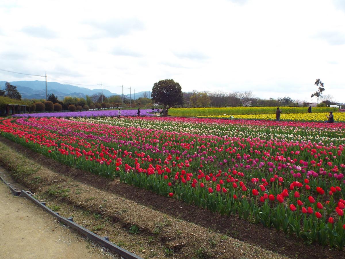 f:id:aigawa2007:20200402134553j:plain