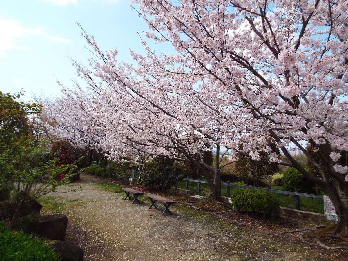 f:id:aigawa2007:20200402134954j:plain
