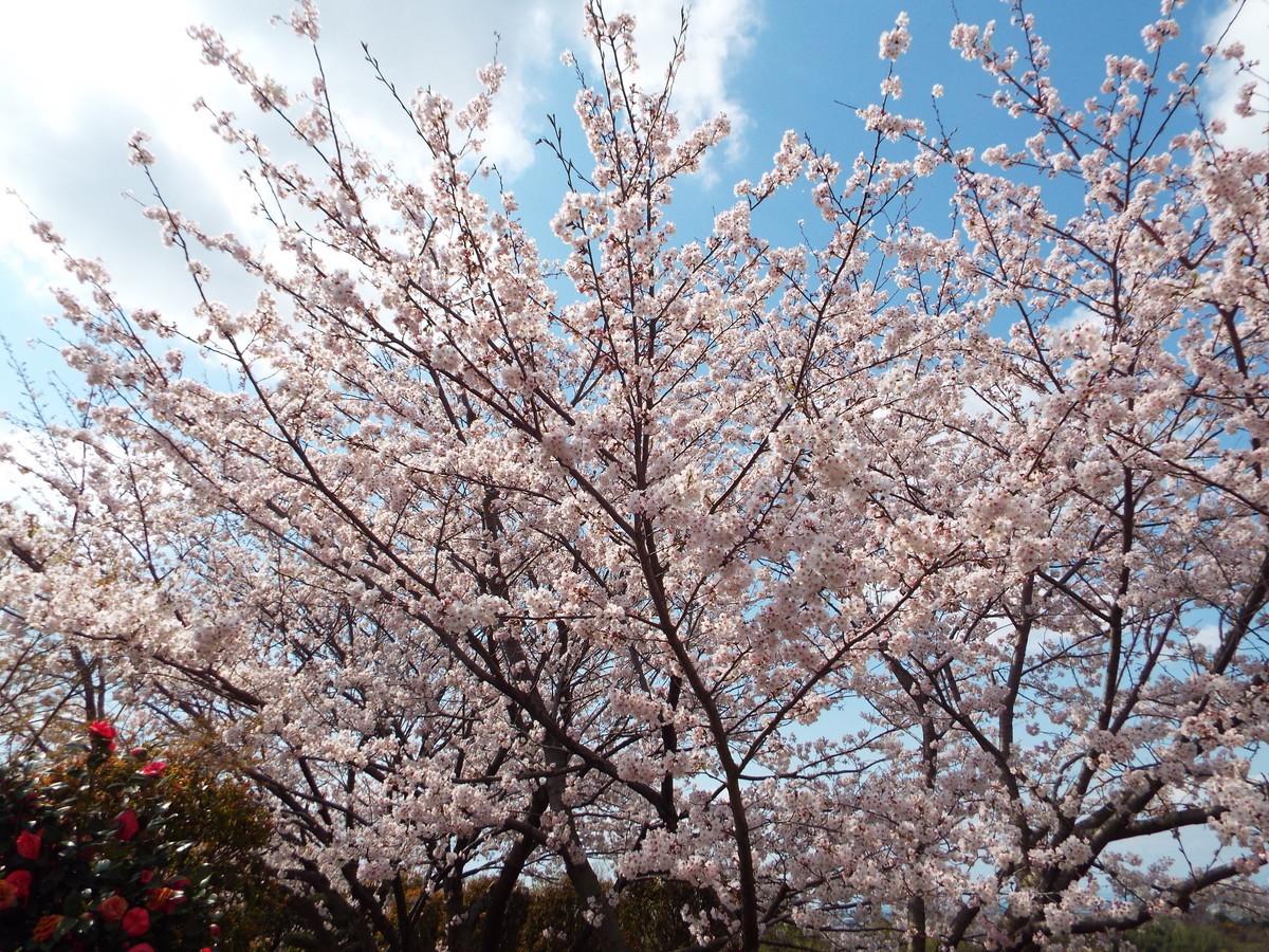 f:id:aigawa2007:20200402135011j:plain