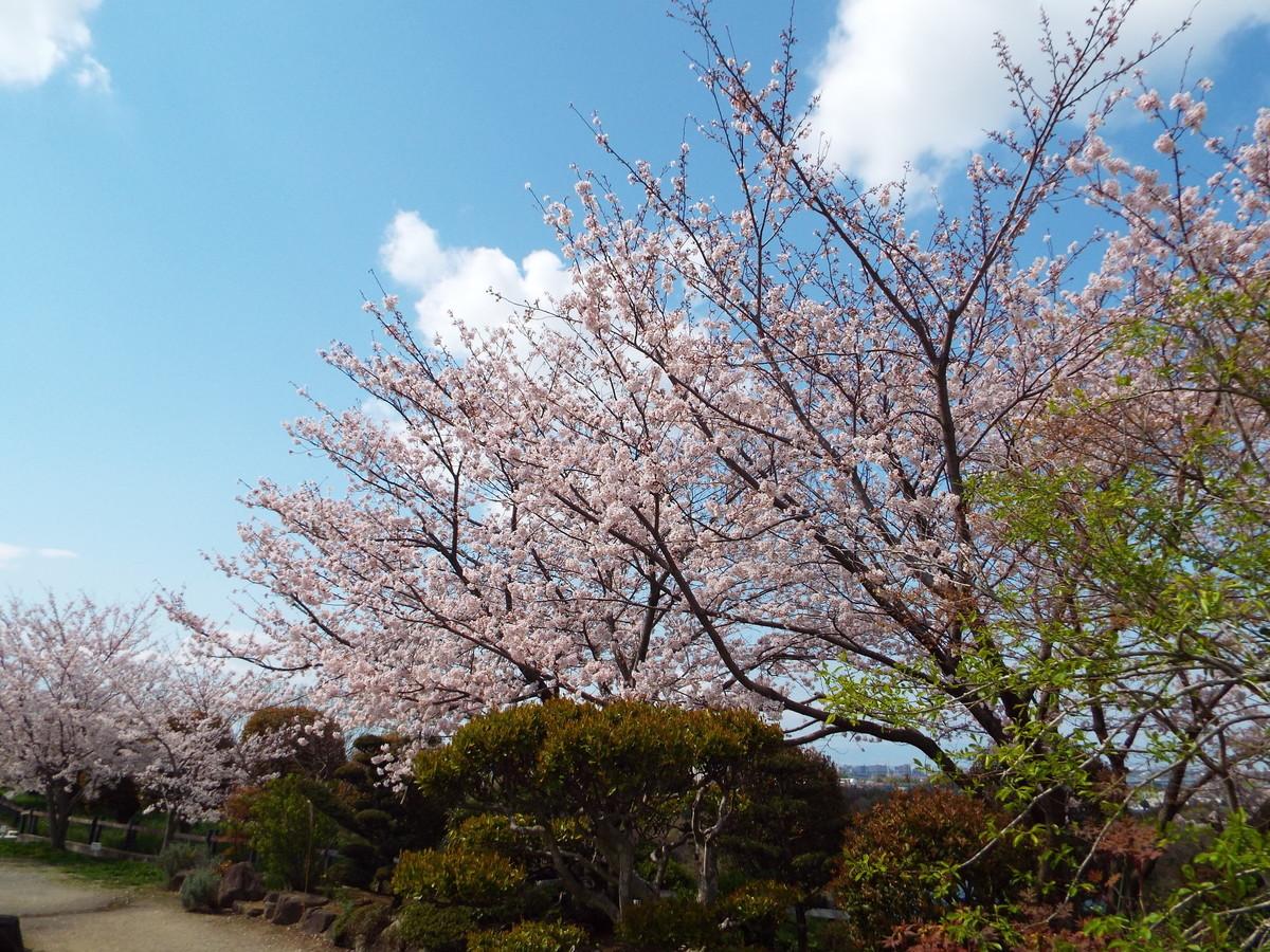 f:id:aigawa2007:20200402135022j:plain