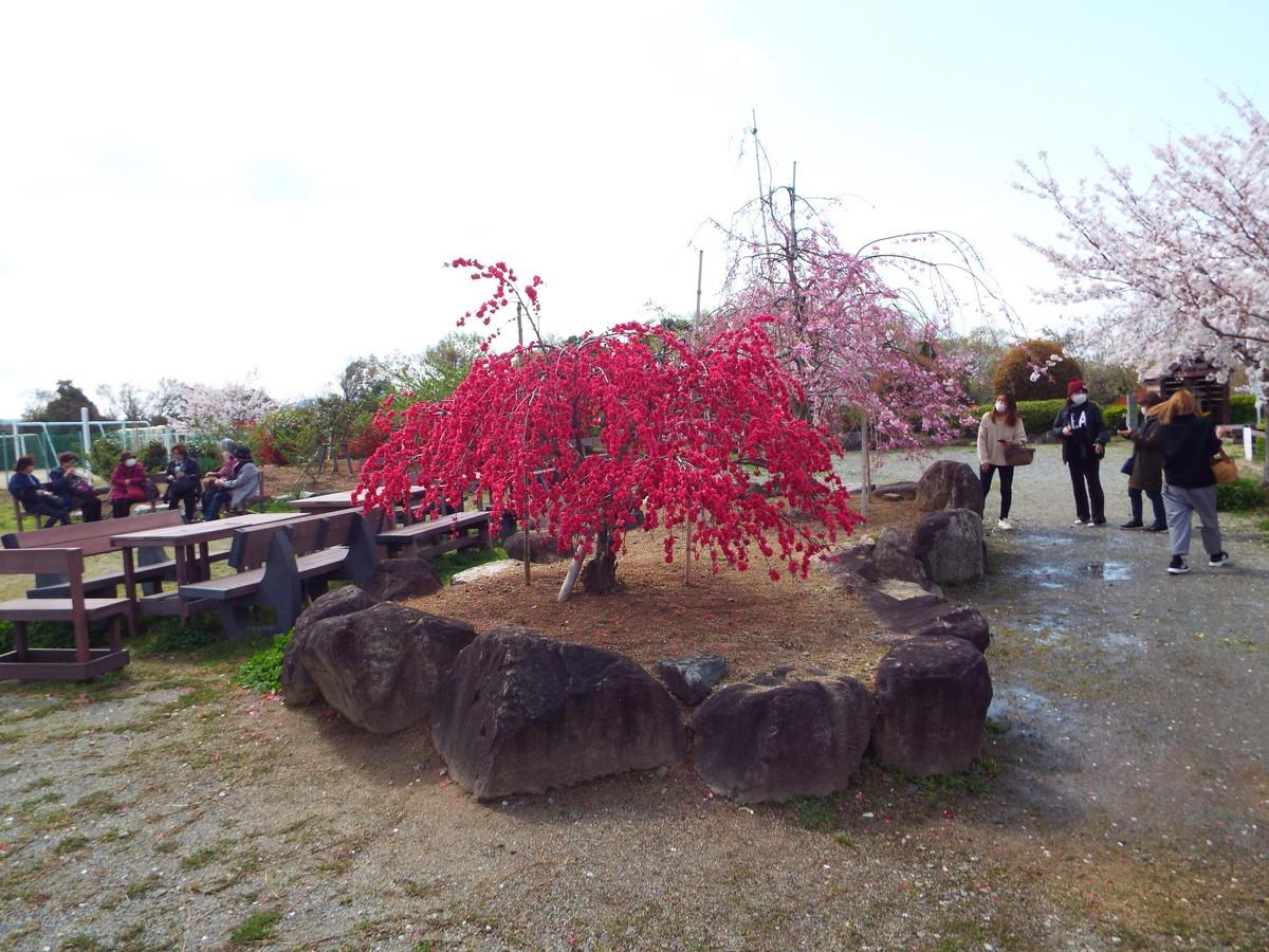 f:id:aigawa2007:20200402135044j:plain