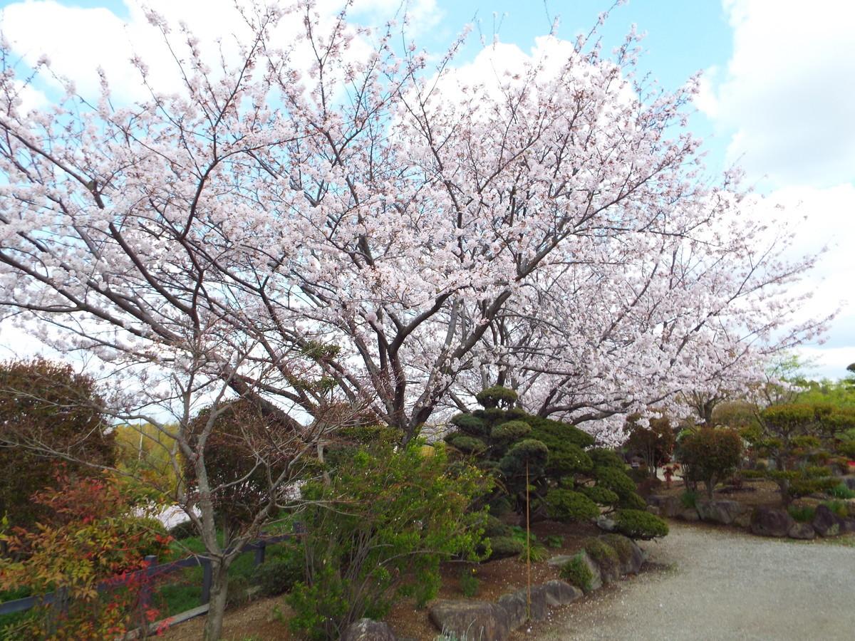 f:id:aigawa2007:20200402135211j:plain