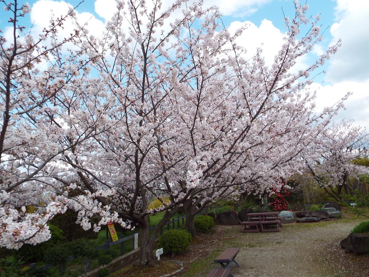f:id:aigawa2007:20200402135303j:plain