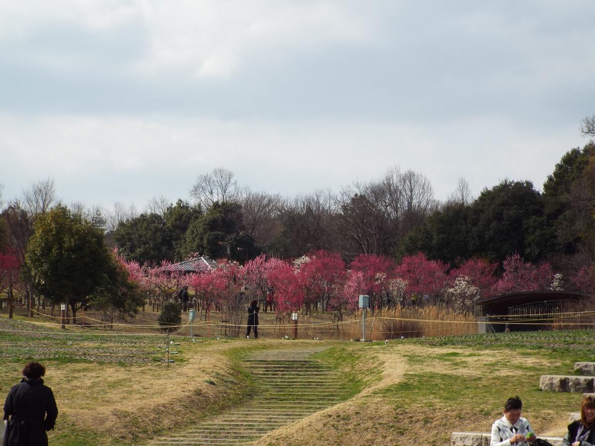 f:id:aigawa2007:20210223130425j:plain