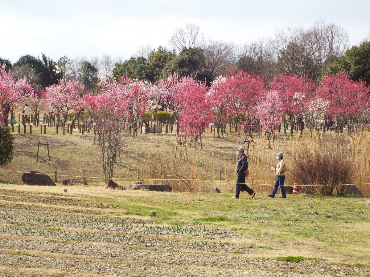 f:id:aigawa2007:20210223130528j:plain
