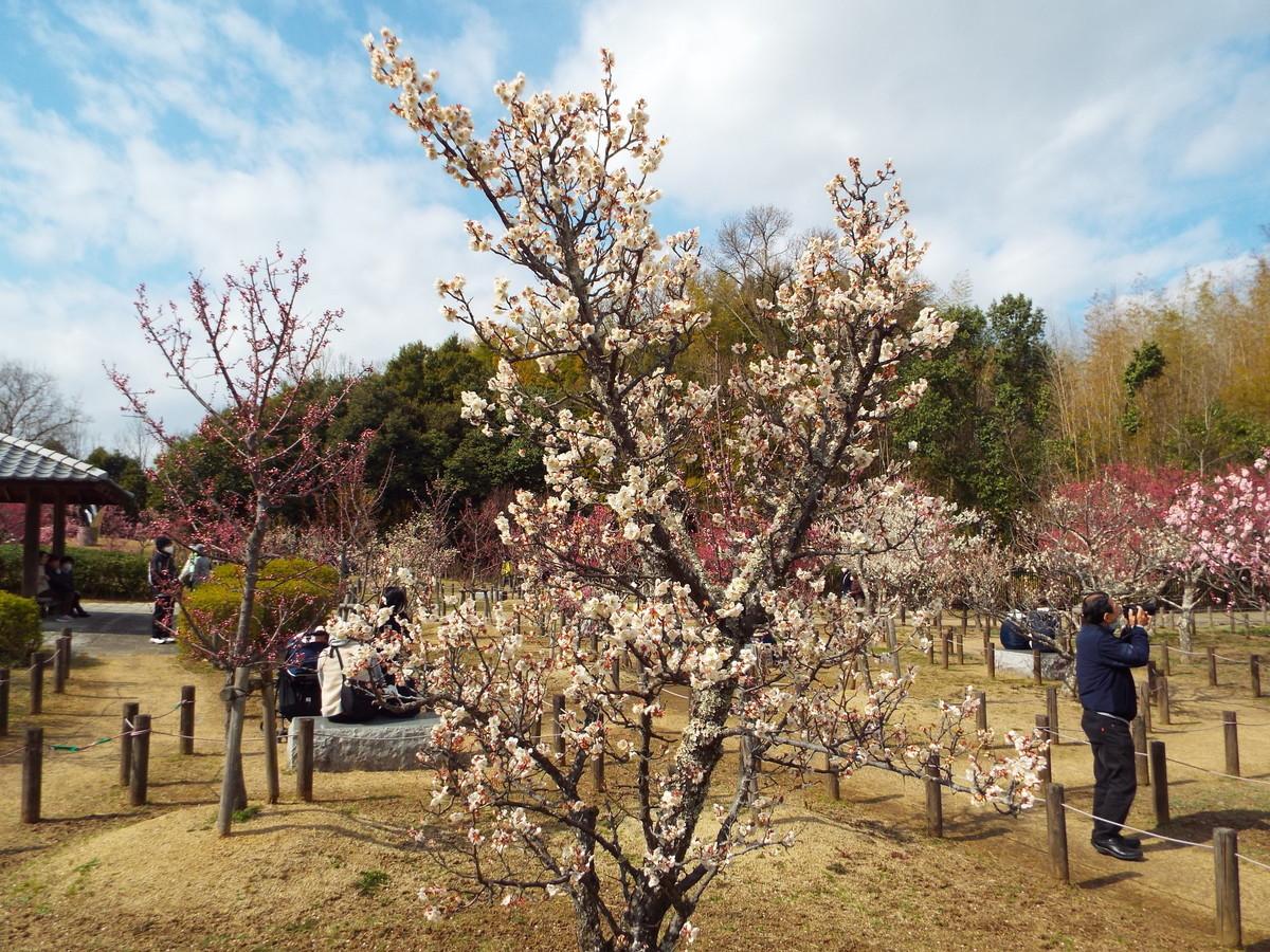 f:id:aigawa2007:20210223131022j:plain