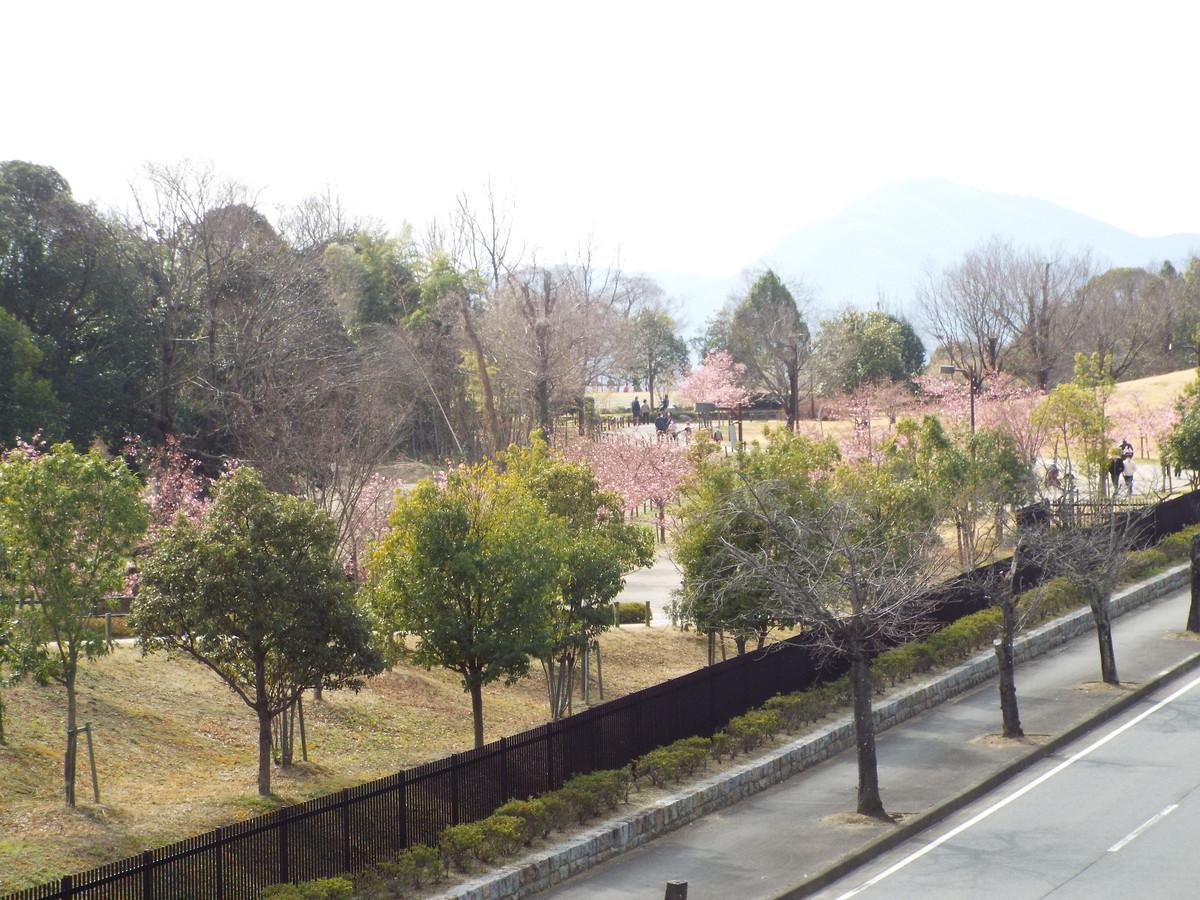 f:id:aigawa2007:20210223131818j:plain