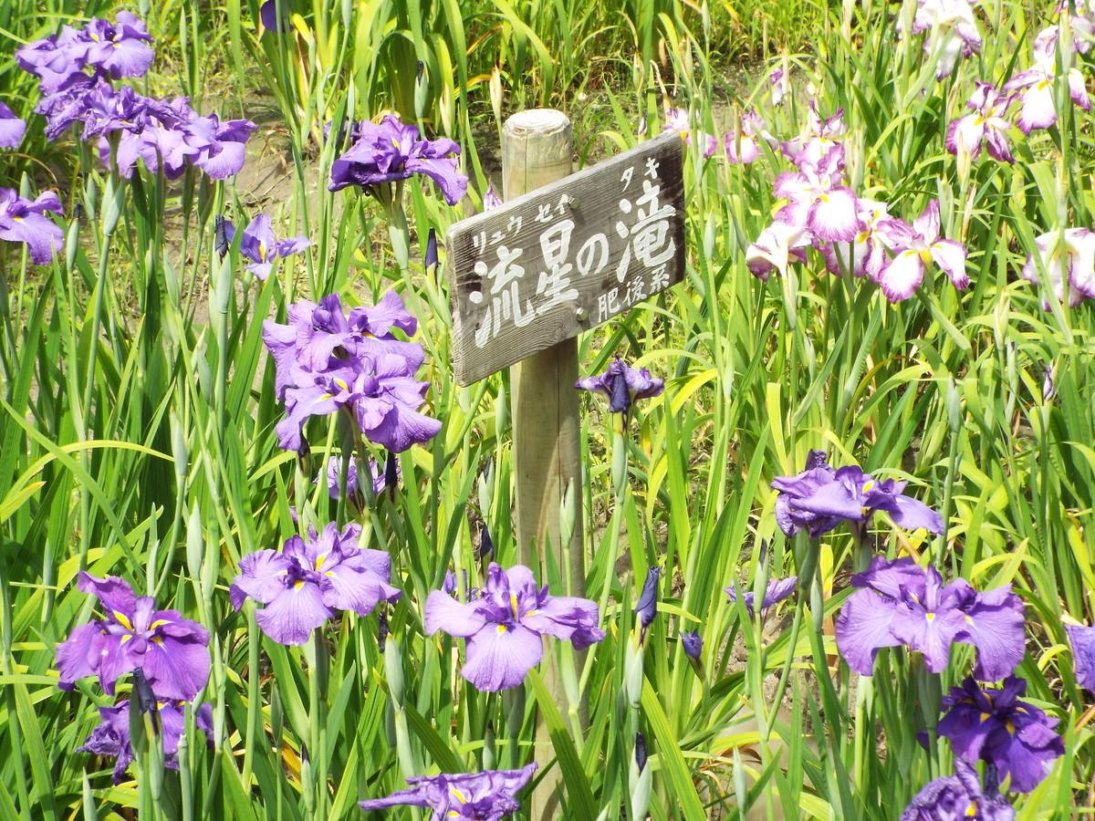 f:id:aigawa2007:20210613134338j:plain