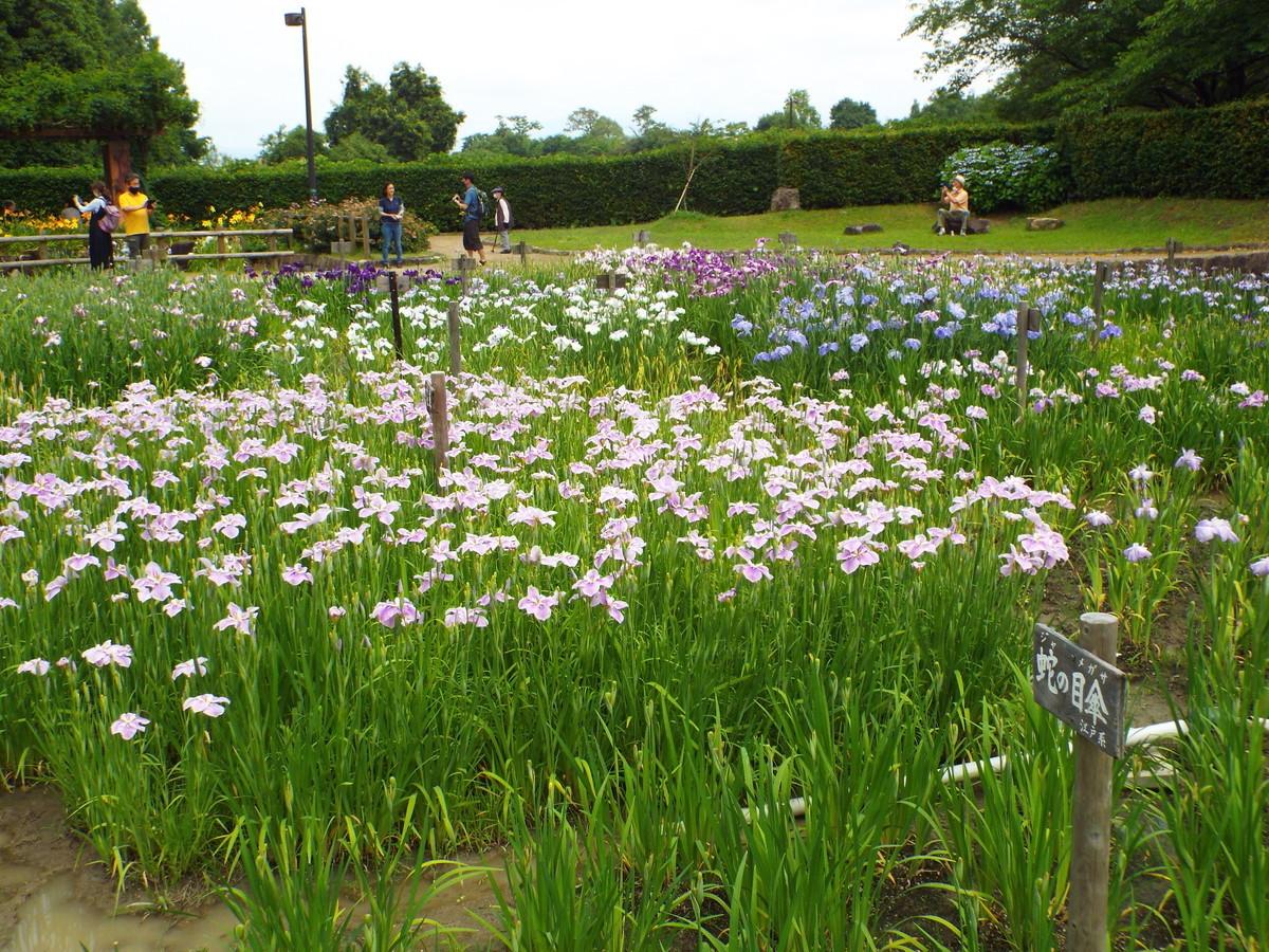 f:id:aigawa2007:20210613134517j:plain