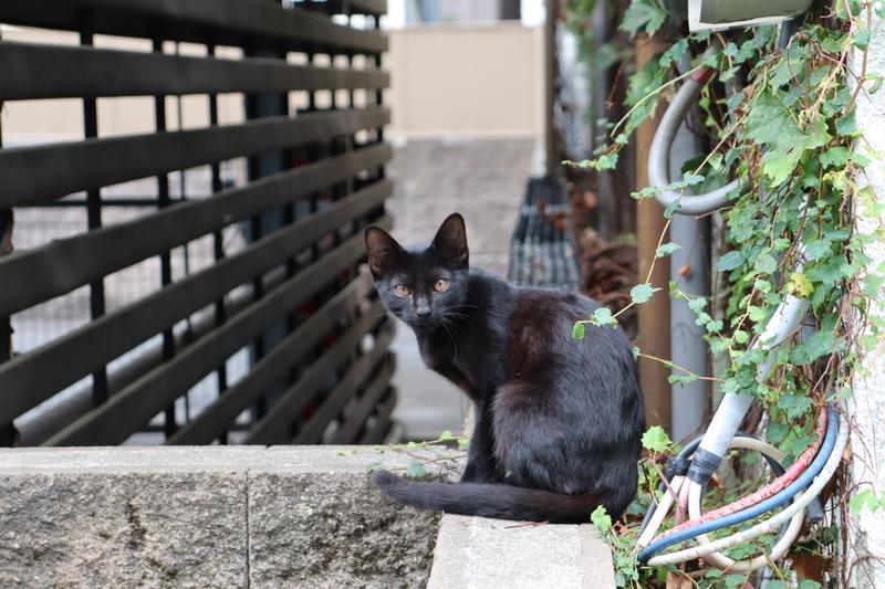 f:id:aihara_kazuki:20200924164525j:plain